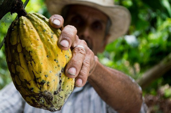 cocoa mexico