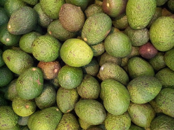 aguacate mexico