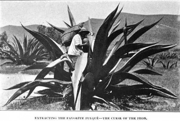 extraccion de pulque mexico 1904
