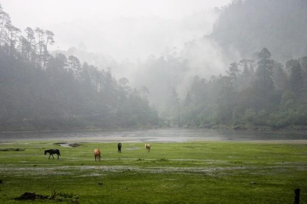 fauna lagunas de zempoala morelos