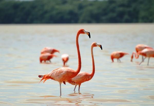 flamingos celestun yucatan