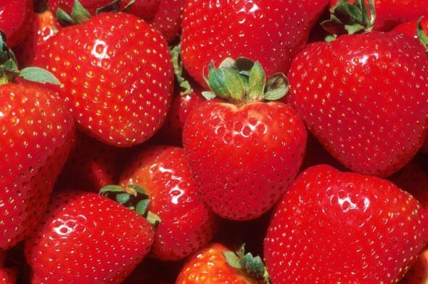 fresas mexico
