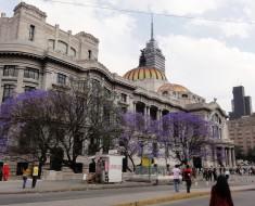 jacarandas ciudad de mexico df