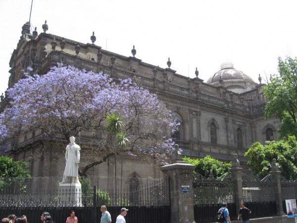jacarandas mexico df
