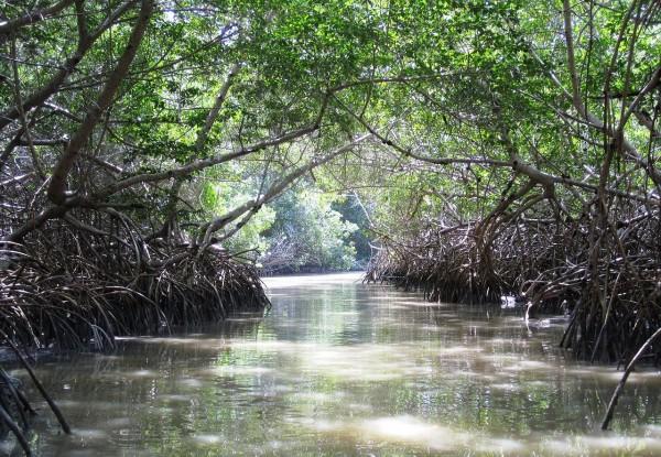 manglares celestun yucatan
