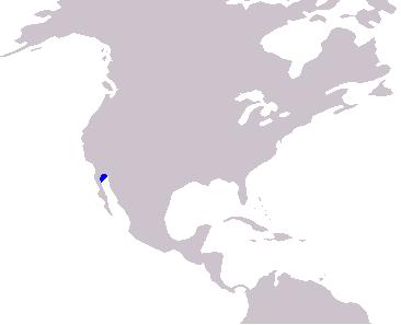 vaquita marina habitat migracion
