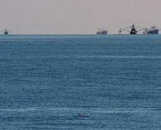 vaquita marina golfo de mexico