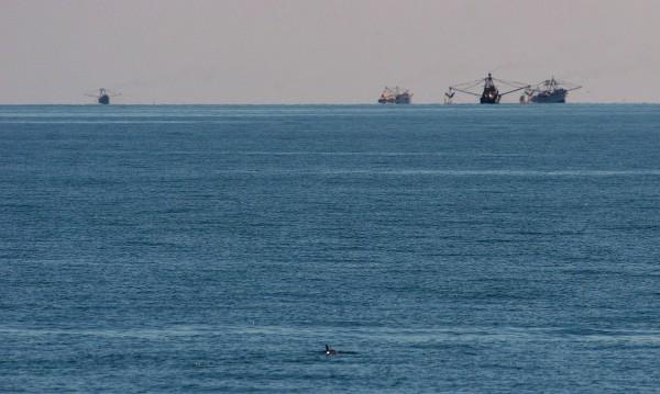 vaquita marina mexico