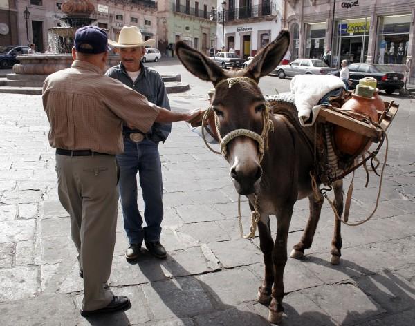 vendedor pulque burro