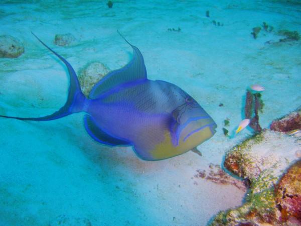 barrera coral riviera maya