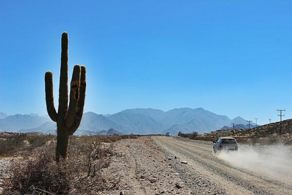 cactus gigante san felipe baja california