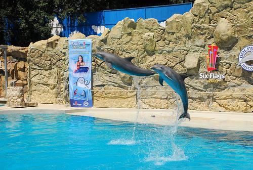 delfinarios nadar con delfines mexico