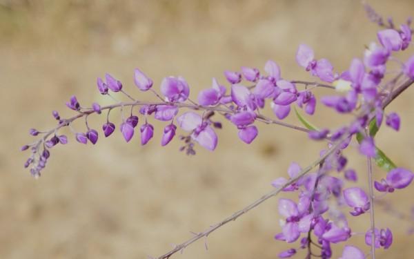 flora y fauna lagunas de montebello chiapas mexico