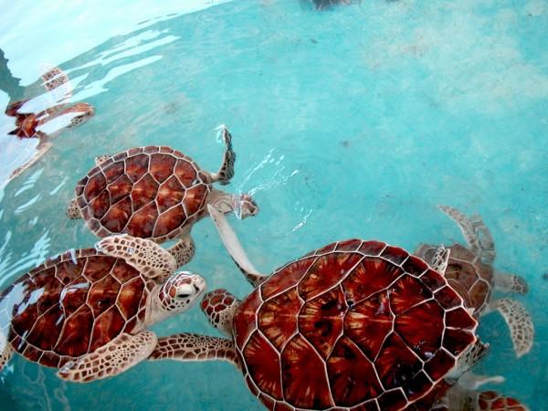 granja tortugas islas mujeres quintana roo