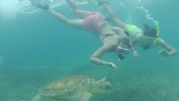 mexico tortugas marinas