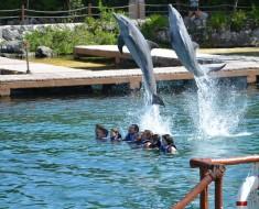 nadar con delfines mexico