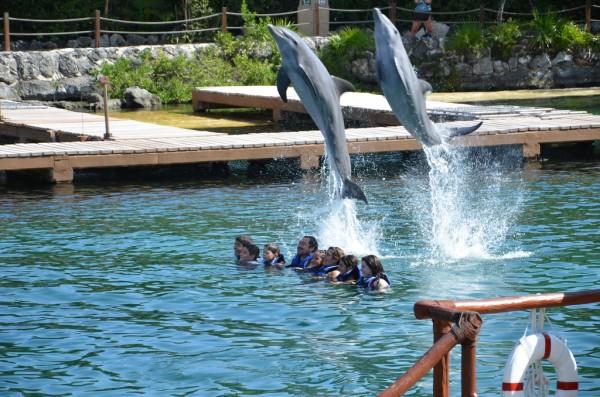 nadar con delfines en mexico