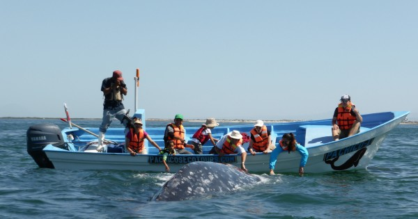santuario avistamiento ballenas grises baja california mexico