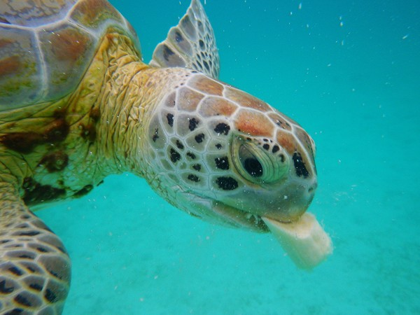 santuarios mexico tortugas marinas