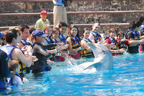 six flags mexico nadar con delfines