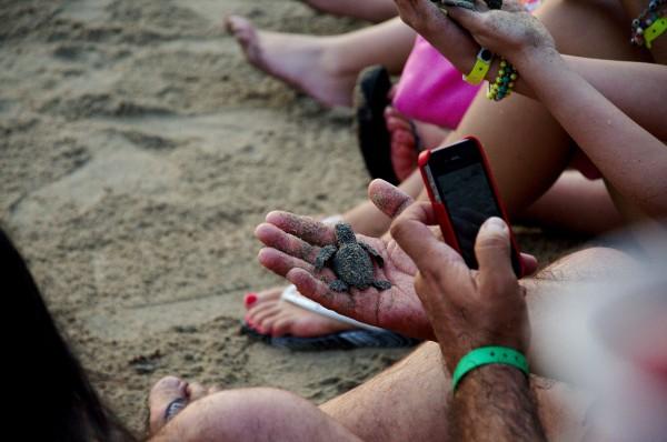 tortugas marinas de mexico en peligro de extincion