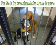 abrazo perros refugio