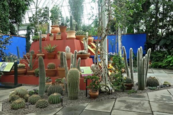 cactus pinceles casa azul frida kahlo jardin botanico