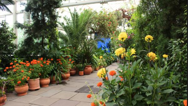 pinceles casa azul frida kahlo jardin botanico nueva york