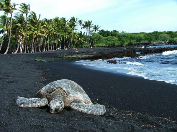 playa arena negra punaluu hawaii