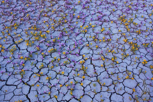 Mar de Flores en Badlands, Utah