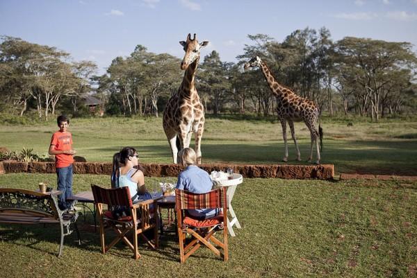 giraffe manor hotel nairobi kenia