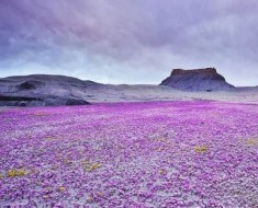Mar de Flores en Badlands, Utah