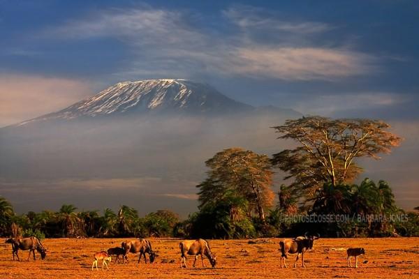 Monte Kilimanjaro, Parque Nacional del Kilimanjaro, Tanzania