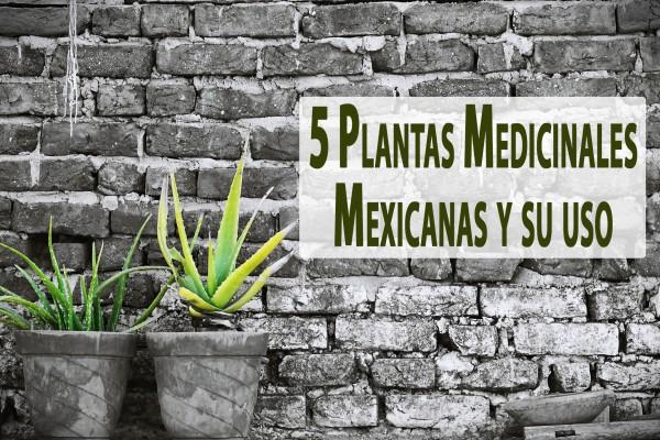 5 Plantas Medicinales Mexicanas y su uso