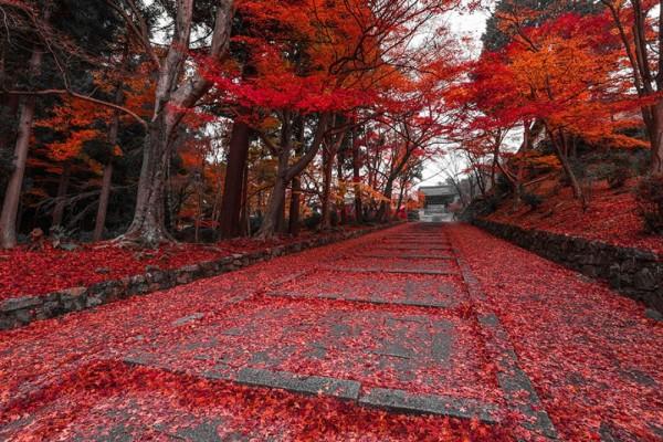 arces kyoto japon