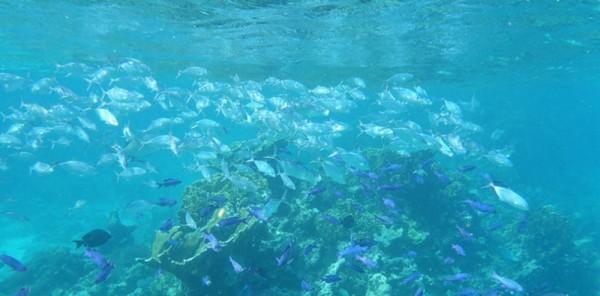 barrera de coral belice