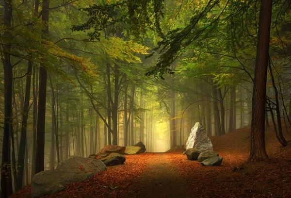 bosque de baviera alemania