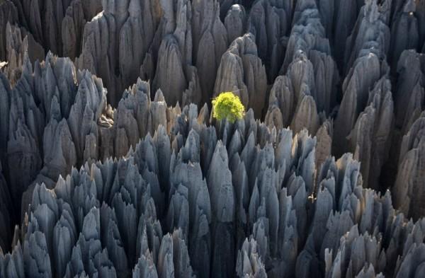 Tsingy de Bemaraha, el bosque de piedra en Madagascar