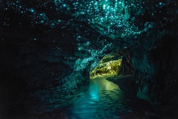 Cuevas de Waitomo en Nueva Zelanda