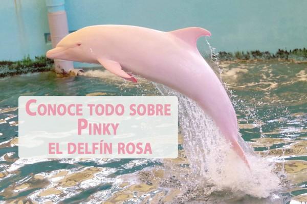 pinki delfin de color rosa