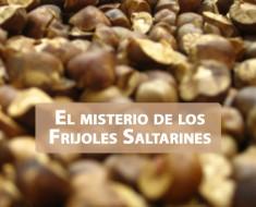 frijoles saltarines
