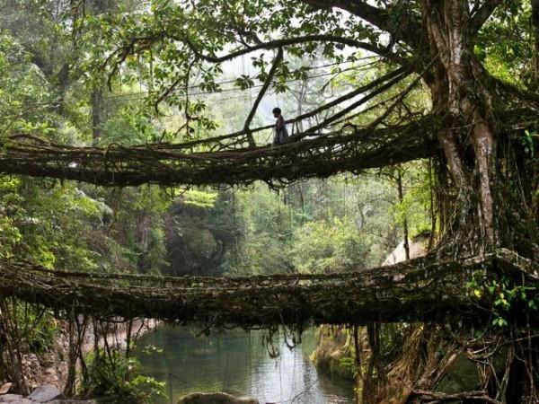mawsynram puentes raices lluviosos