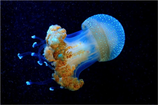 medusa sin photoshop