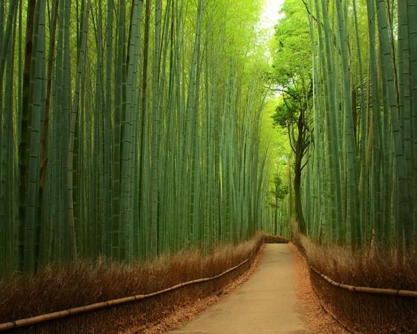 parque bamboo kyoto japon