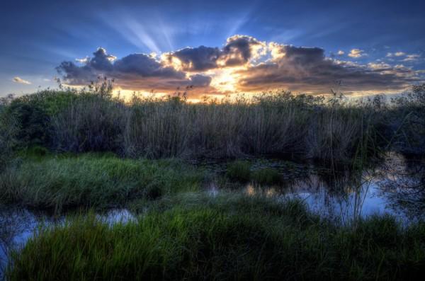 parque nacional de los everglades eeuu