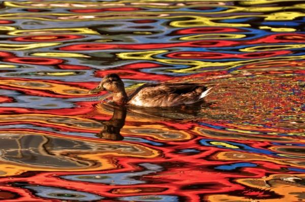 reflejos en el agua sin photoshop