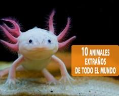10 animales extraños de todo el mundo
