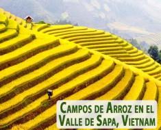Campos de Arroz en el Valle de Sapa en Lao Cai, Vietnam