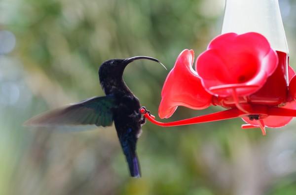 colibri mexico prehispanico