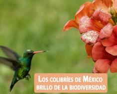 Colibríes de México y Norteamerica